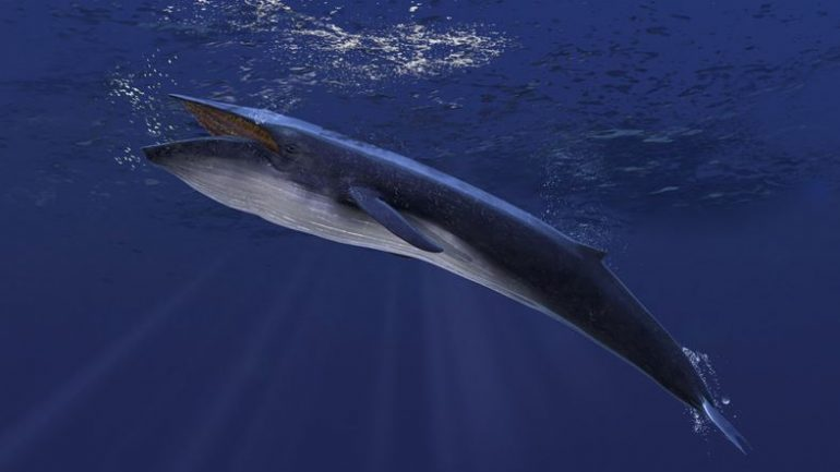 An unheard of song leads to the discovery of the ocean