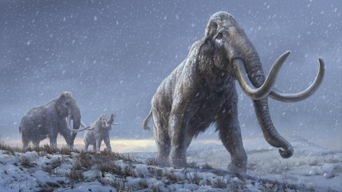 Reconstruction of the steppe mammoth (Bulletin of the magazine