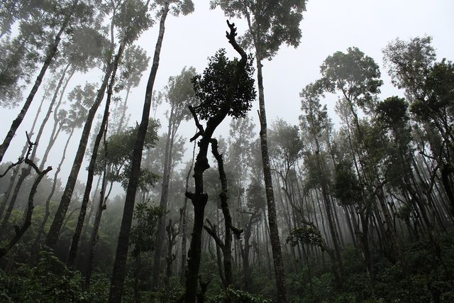 Palm oil-based surfactants: often at the expense of the rainforest