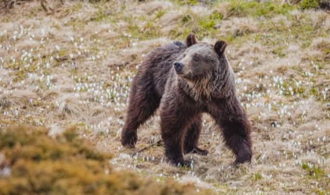 Sanctuary of the bear Arosa