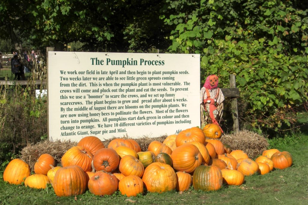 This pumpkin farm is located in Fort Langley, southeast of Vancouver.